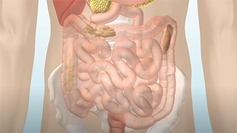 Das Verdauungssystem - Die Funktionsweise des Darms